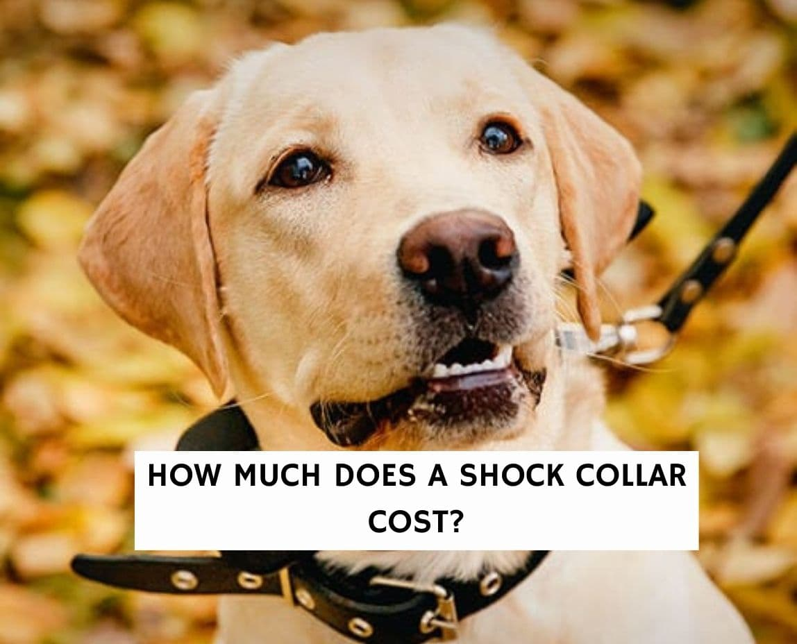 How much does a shock collar cost?