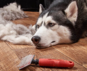 Are slicker brushes good for dogs
