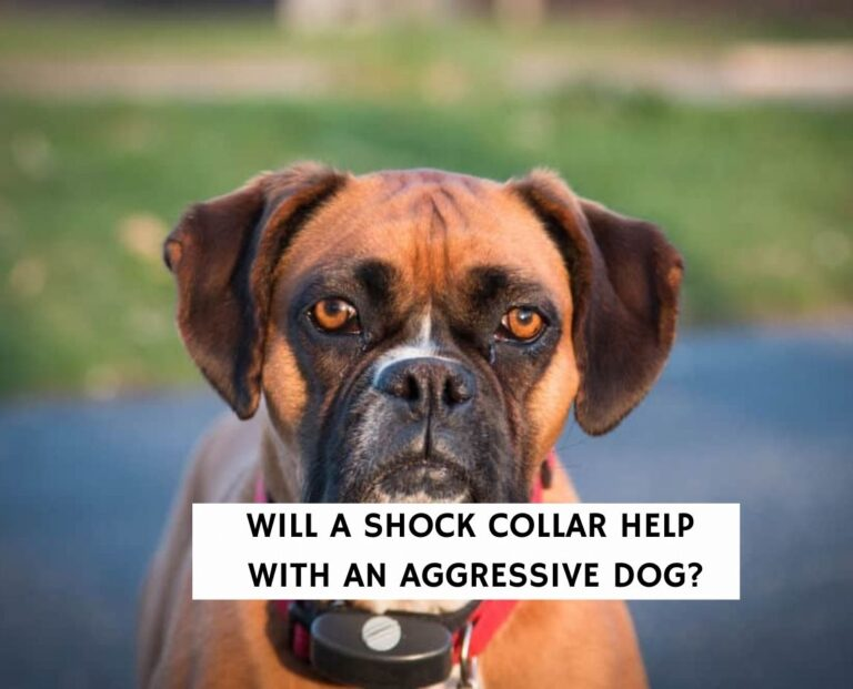 Will A Shock Collar Help With An Aggressive Dog?