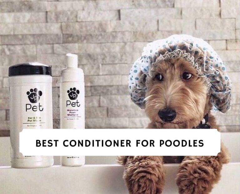 Best Conditioner for Poodles