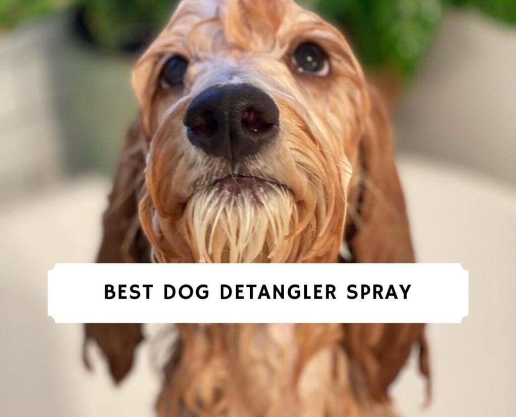 Best Dog Detangler Spray
