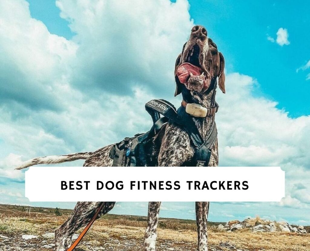 Best Dog Fitness Trackers