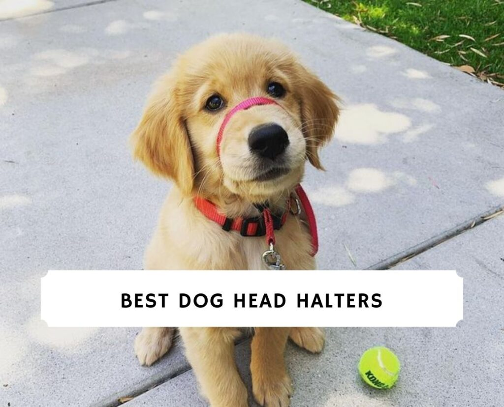 Best Dog Head Halters