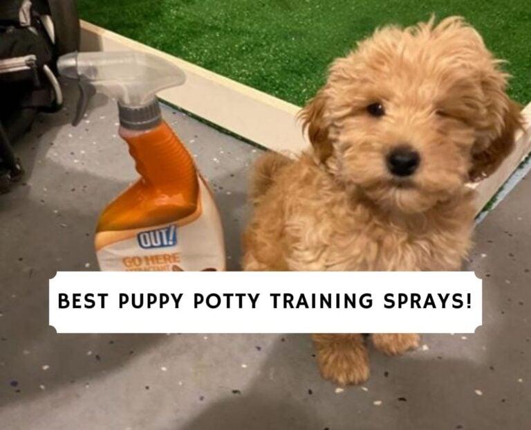 Best Puppy Potty Training Sprays