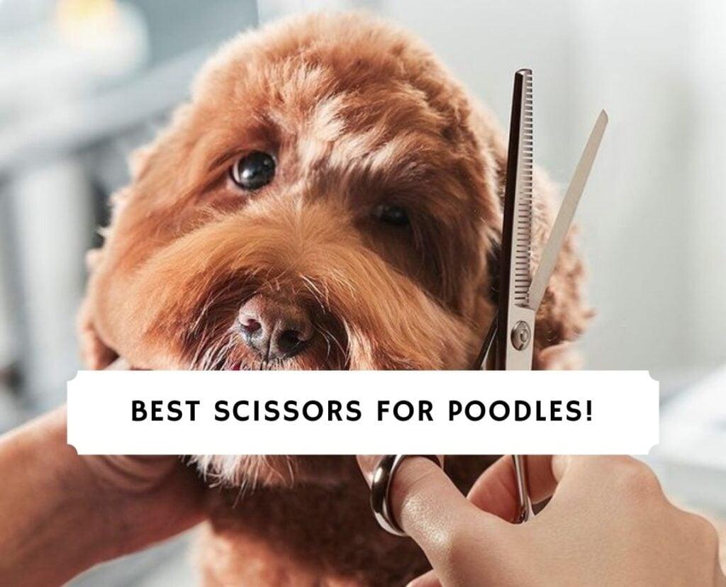 Best Scissors for Poodles