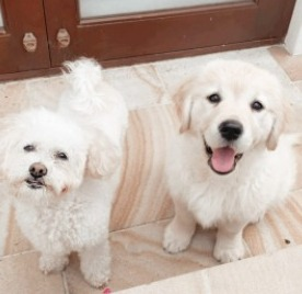 Can a Dog Still Produce Sperm After Being Neutered