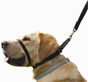 Canny Collar - The Collar for Dog Training and Walking, Helps with Dog Training and Helps to Stop Dogs Pulling on The Leash .99
