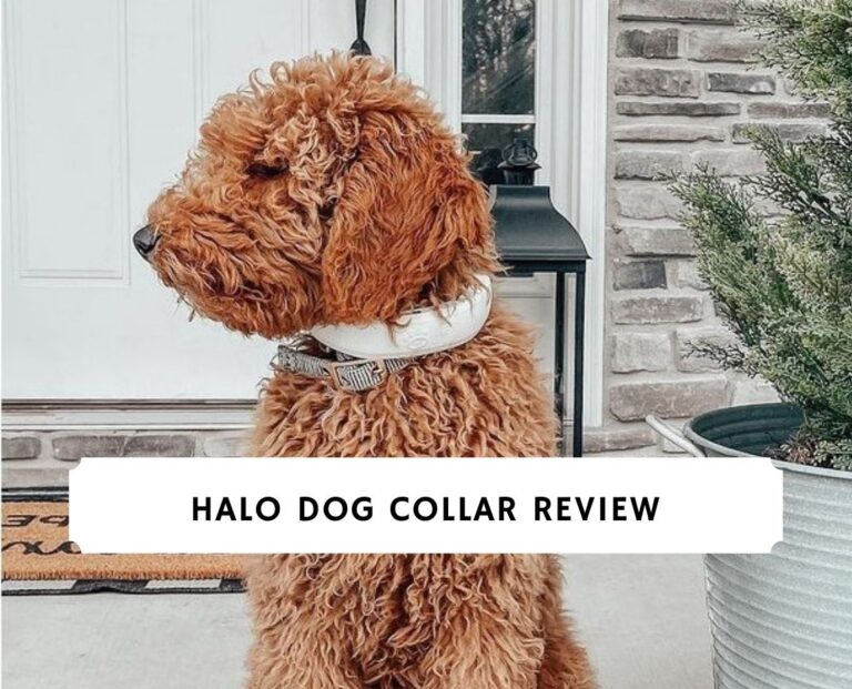 Halo Dog Collar Review