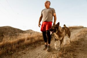 Halo Remote Dog Training