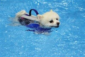 How Do I Convince My Pomeranian to Stop Hating Water