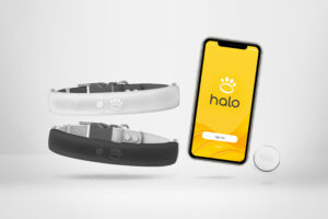 How to Purchase a Halo Smart Dog Collar