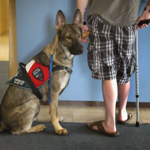 Notes On Service Dogs