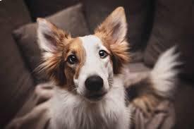 Reasons Dogs Growl at Night at Owner