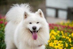 Scandinavian Dog Names Based on Famous Vikings
