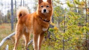 Scandinavian Dog Names Based on Nature