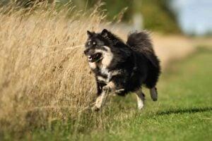 Scandinavian Dog Names Based on Norse Mythology