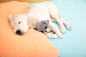 What to Do About an Overtired Puppy
