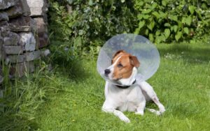 When Should I have my male dog neutered