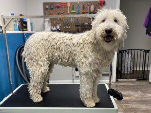 best dog conditioner detangler