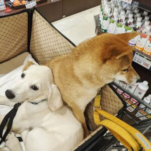 dog friendly stores 2021
