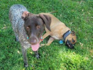 halo dog fence reviews