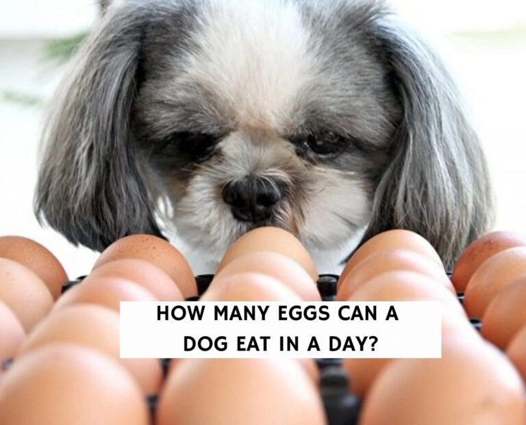 How Many Eggs Can a Dog Eat in a Day?