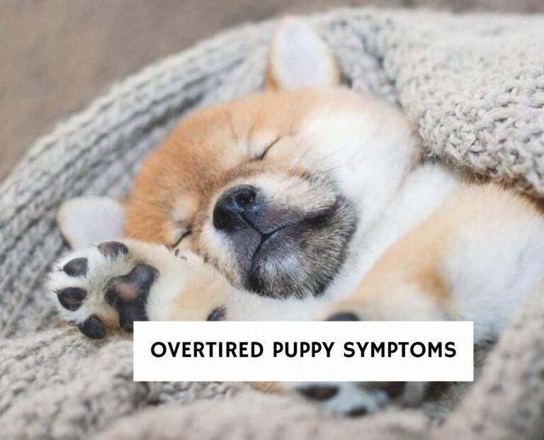 Overtired Puppy Symptoms