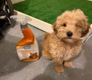 potty training spray