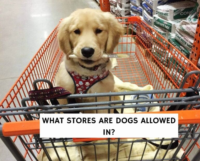 What Stores Are Dogs Allowed In?