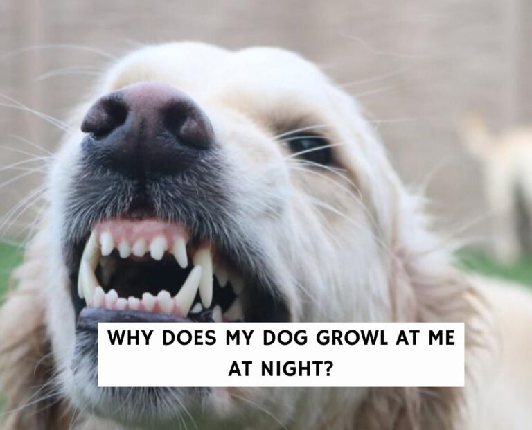 Why Does My Dog Growl At Me at Night?