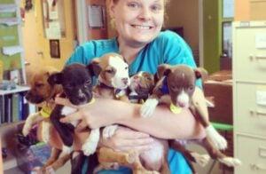 2. Austin Pets Alive