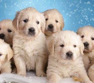 Animal Kingdom puppies and love