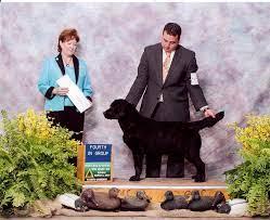 Beechcroft Labradors