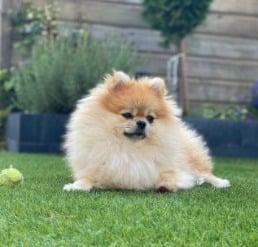 Can Dogs Eat Mahi-Mahi Skin