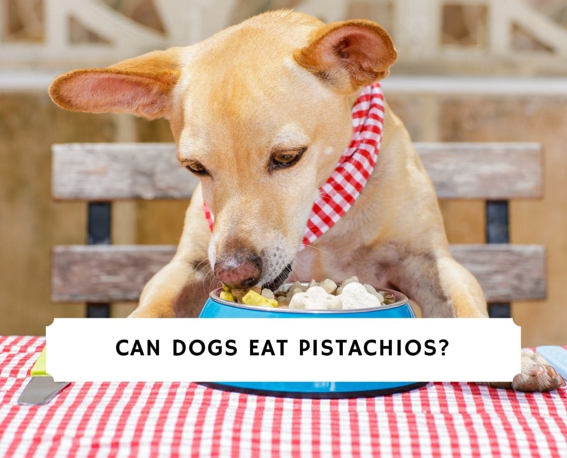 Can Dogs Eat Pistachios