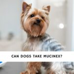 Can Dogs Take Mucinex