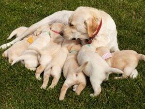 Healthy Pups
