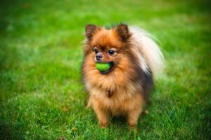 How to Find the Right Breeder in Michigan?
