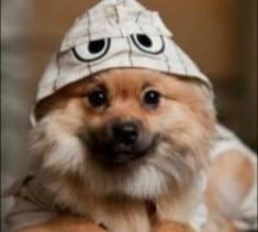 Kiester Puppy Dog World