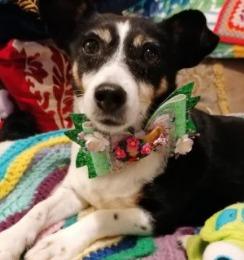 Pistachio Has Fat Content For Dogs