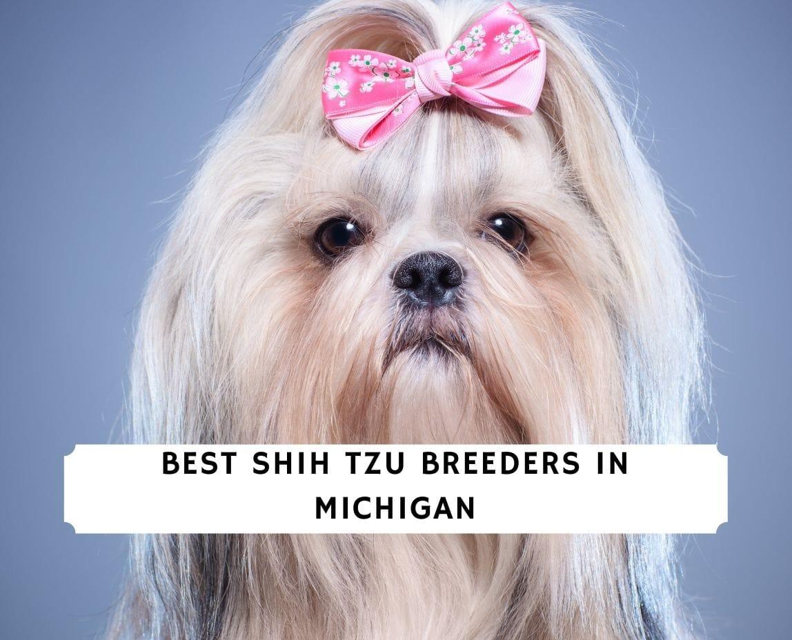 Shih Tzu Breeders in Michigan