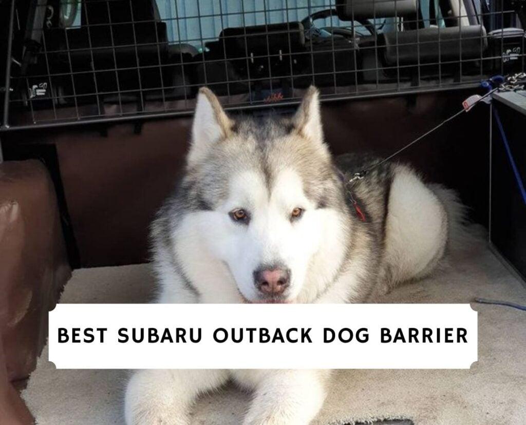 best Subaru outback dog barrier