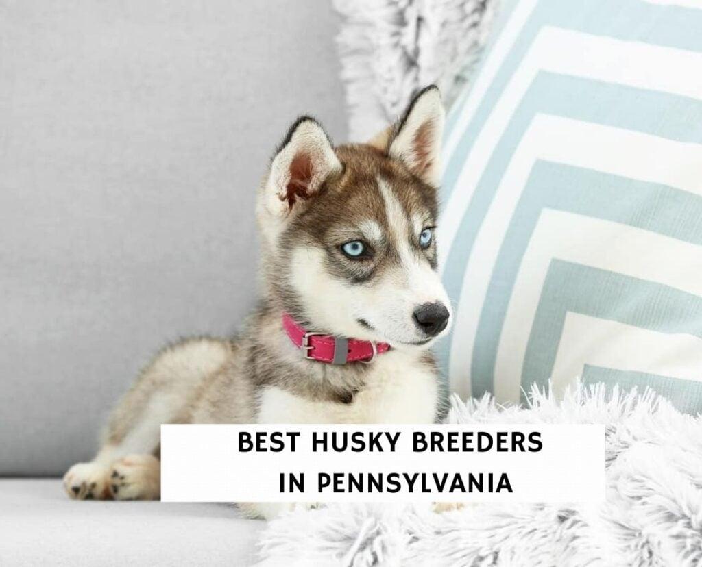Best Husky Breeders in Pennsylvania
