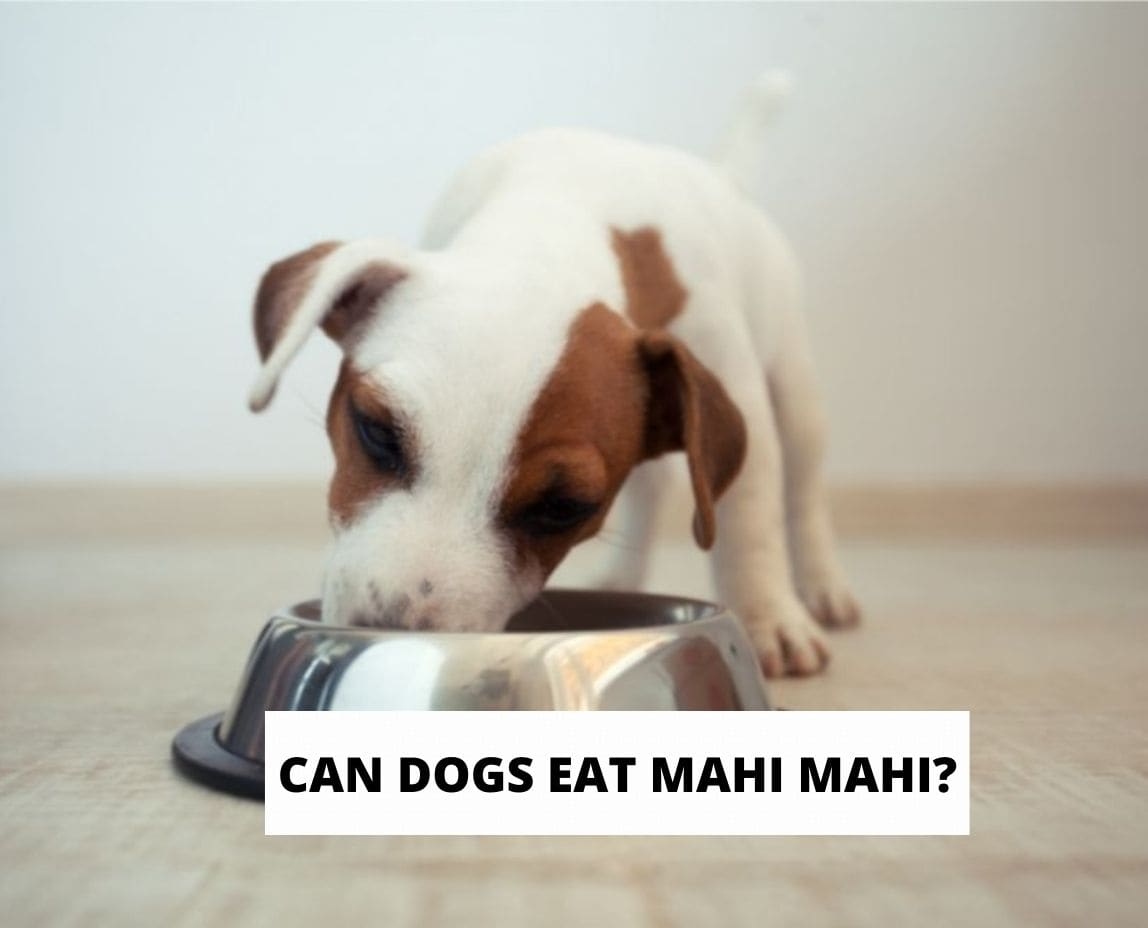 Can Dogs Eat Mahi Mahi?