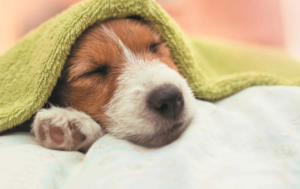 What is Mucinex? How Can it Help My Dog?