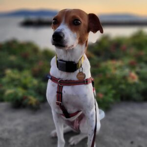 gps dog tracker for small dogs
