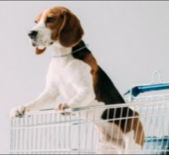 Colorado Beagle Rescue