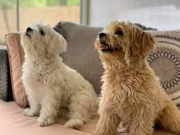 Palm View Pups