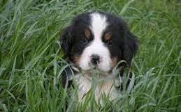 Water Oak Farm Dog