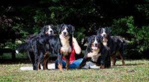 Brooks Berner Bears breeders